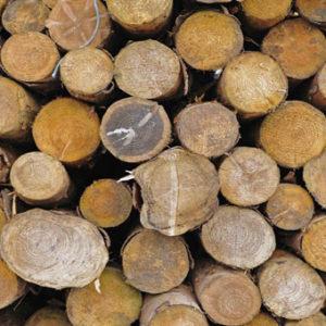 Δρυς ξύλα